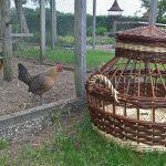 Kippenvervoermand groot
